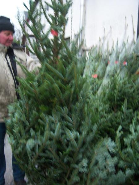 hugh gilmore google - Real Christmas Trees For Sale