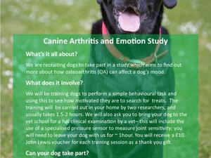DOG OWNERS REQUIRED FOR PAID RESEARCH STUDY