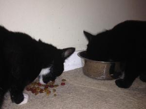 Cats free to good home