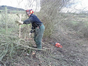 Tree surgery, country side management and Landscaping services