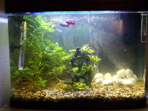 64 Litre Fish Tank from Pets At Home