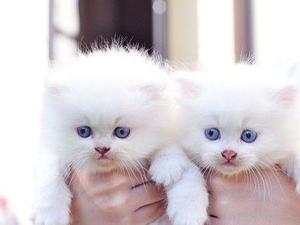 Foldex Cat Uk