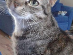 2 cats need re homing