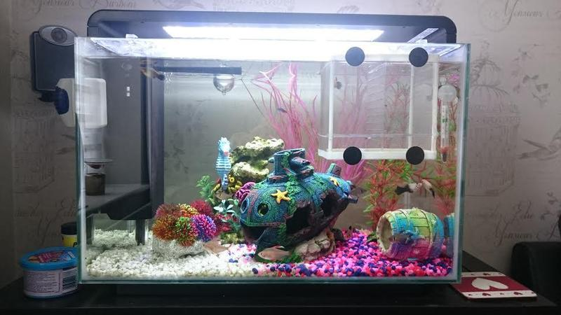 Superfish tropical fish tank 60 litre compete set up in for Decoration aquarium 60 litres